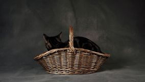 Cat In Rustic Wicker Basket Stock Photos
