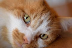 Cat& x27; s眼睛 免版税库存照片