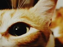 cat& x27; s眼睛 库存图片