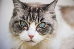 Cat& x27; s神色 库存照片