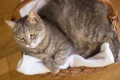 Cat`s basket Stock Images
