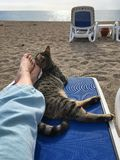 When cat`s best friend. When the cat is the best friend, the cat on the beach lay down on a lounger to the resting girl, with all the tenderness leaned against Stock Photos