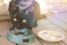 Cat's breakfast Royalty Free Stock Photography