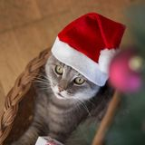 Cat`s Christmas Royalty Free Stock Image