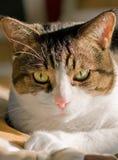 Cat's Close-up. Close-up of a cute cat stock image