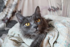 Cat`s curiosity royalty free stock images