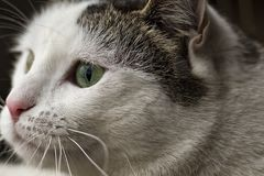 Cat`s dream. Part of the magic of home cats is the tranquility they emit Stock Image