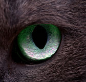 Cat's eye Royalty Free Stock Photos