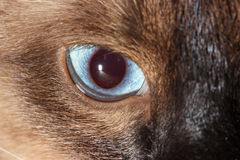 Cat's Eye. Mysterious cat's blue amber eye Stock Images