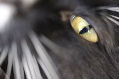 Cat's eye. Close-up photo of cat's eye Stock Photography