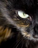 Cat's Eye. Close up of cat's eye staring at you Stock Images