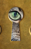 The cat's eye. Royalty Free Stock Photos