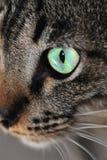 Cat's Eye Royalty Free Stock Photography