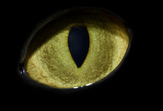 Cat's eye. Close-up with vertical pupil Royalty Free Stock Photos