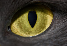Cat's eye Stock Photos