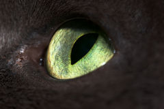 Cat's eye Royalty Free Stock Photo