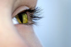 Cat's eye. Sight of a girl – cat Stock Images