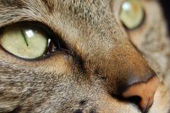 Cat's Eye. Closeup of a cat's face Royalty Free Stock Photos