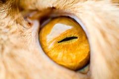 Cat's eye. Macro shot of a cat's eye Royalty Free Stock Photo
