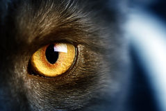 Cat's eye. Mysterious cat's yellow amber eye Royalty Free Stock Photos