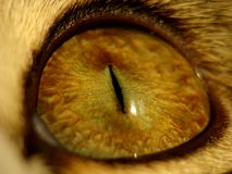 Cat's eye Royalty Free Stock Images