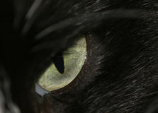 Cat's Eye Royalty Free Stock Image
