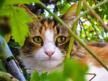 Cat's eye. Cat with beautiful big eyes in grave farm Royalty Free Stock Images
