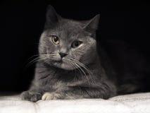 Cat's-eye. stock image
