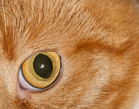 Cat's eye close-up Stock Photos