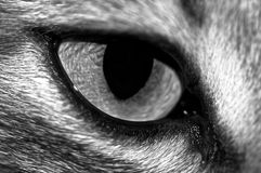 Cat's Eye. Close-up shot of a cat's eye royalty free stock photography
