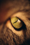 Cats Eye Stock Photography