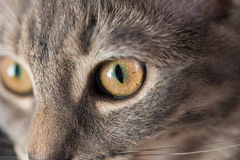 Cat's Eye Stock Images