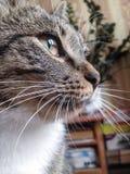 Cat's-eye. Housecat at home Stock Photos