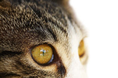 Cat`s eye, isolated. Close up macro cat`s eye, isolated on white Stock Photo