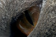 Cat`s eye at maximum magnification macro royalty free stock photography