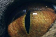 Cat`s eye at maximum magnification macro stock photography