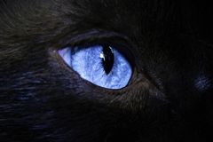 Cat`s eye Stock Photography