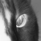 Cat`s eye. A sensual and radiating eye of cat Royalty Free Stock Images