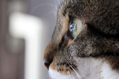 A cat s eye from the side Royalty Free Stock Images