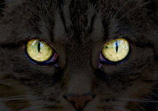 Cat´s eyes Royalty Free Stock Images