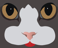 Cat's-eyes. Images background with cat's-eyes by a spout and moustaches Stock Photography