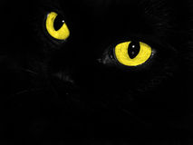 Cat's eyes. Black cat with yellow eyes Royalty Free Stock Photography