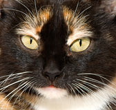 The cat's eyes Royalty Free Stock Photo