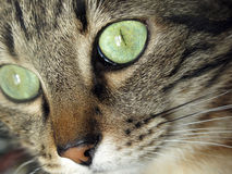 Cat's eyes Royalty Free Stock Photo