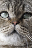 Cat's eyes. Cat's bright big sharp eyes.How lovelily it is Royalty Free Stock Images
