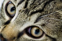 Cat's eyes. Close up of cat's eyes Stock Photography