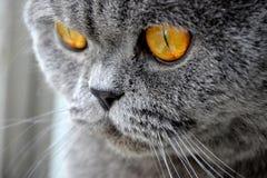 Cat's eyes Royalty Free Stock Image