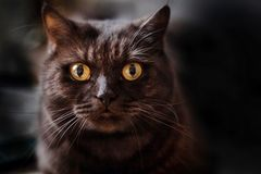 Cat`s eyes from the darkness. The cat looks at you from the darkness, a magical eye royalty free stock photography