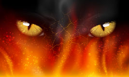 Cat's eyes on fire. Fight, tiger, mammal aggression Royalty Free Stock Image