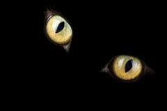 Cat's eyes glowing in the dark Stock Photos